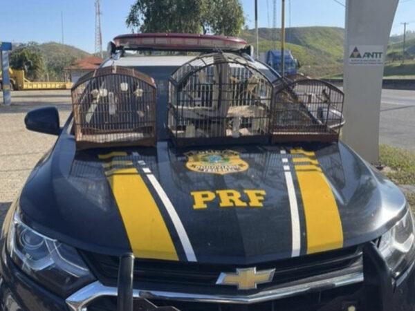Na última segunda (17), a PRF apreendeu transportadores ilegais de pássaros na Dutra