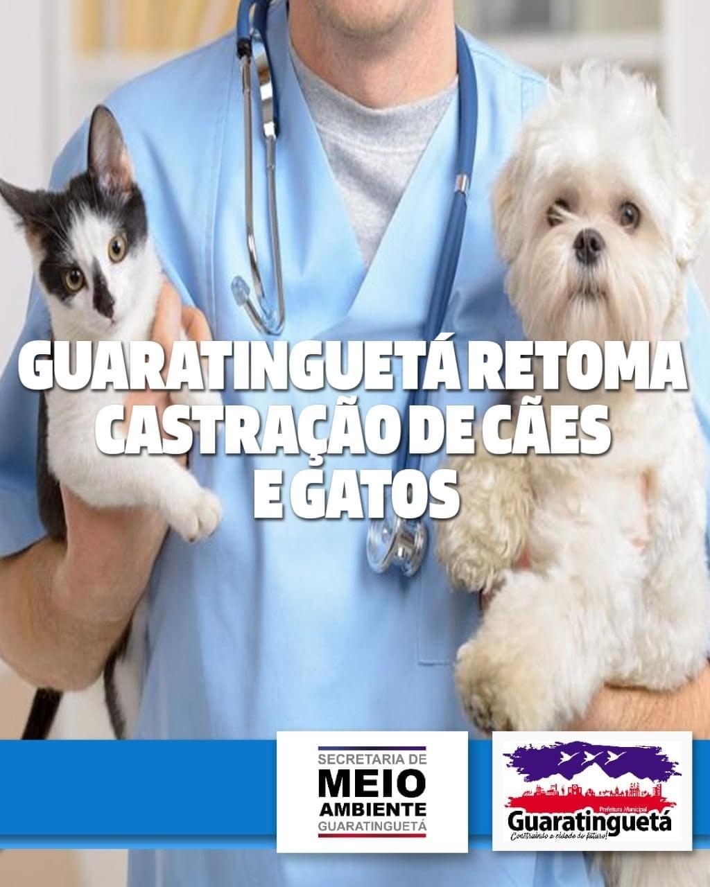 Guará retoma a castração de gatos e cães