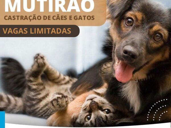 Castração de cães e gatos em Aparecida com vagas limitadas
