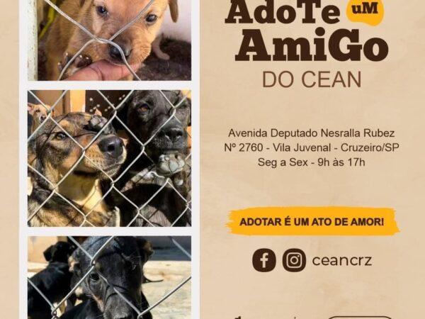 Adote um animalzinho de estimação em Cruzeiro